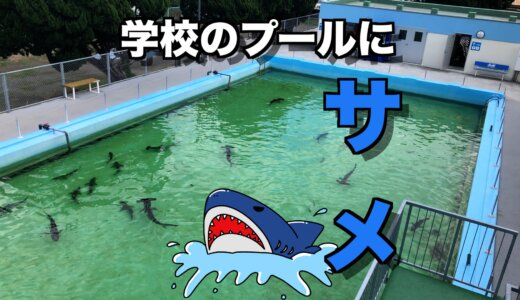 プールにサメがいる⁉︎小学校を水族館にしちゃった【むろと廃校水族館】