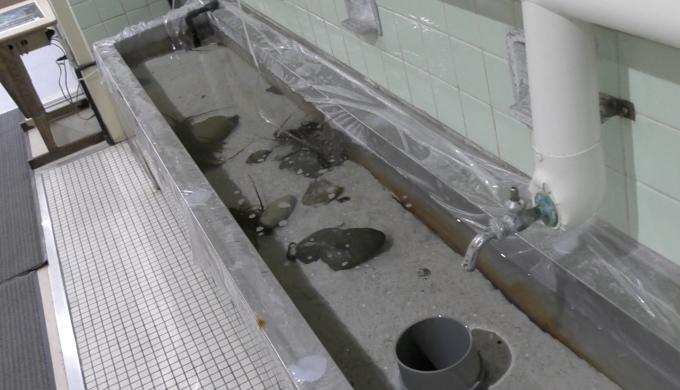 手洗い場のタッチプール