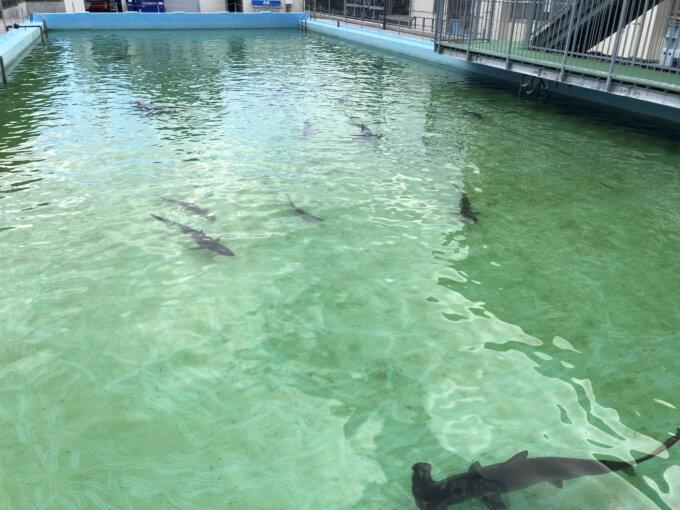 プールにサメ